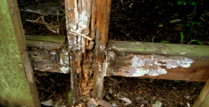 wooden fence rot